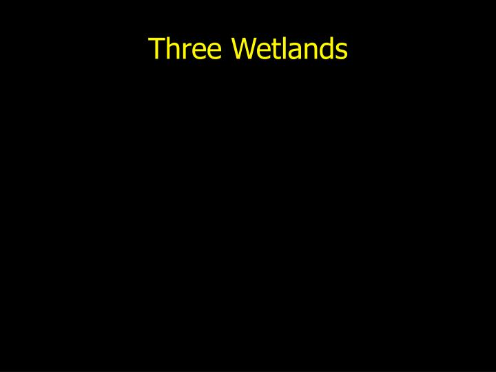 Three Wetlands