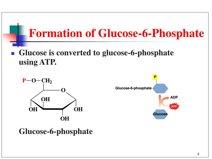 heat of formation of glucose Enthalpy changes associated with the lactic fermentation of glucose enthalpy changes associated with the lactic the enthalpy change when glucose is.