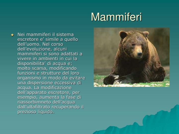 Ppt l apparato escretore powerpoint presentation id for Mammiferi che vivono in acqua