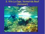 s vito lo capo vermetide reef antonioli