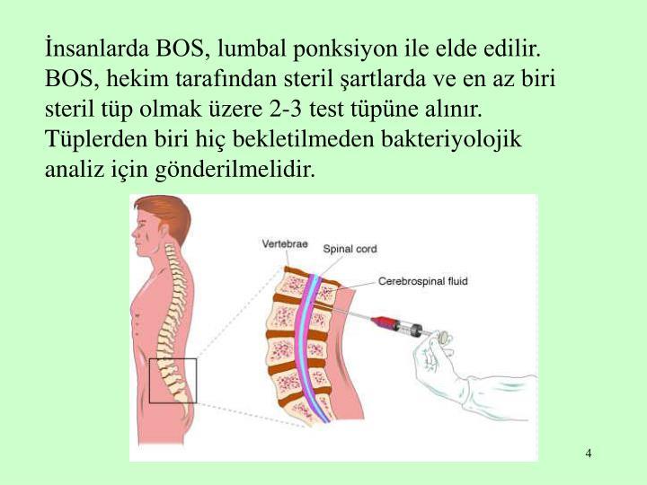 İnsanlarda BOS, lumbal ponksiyon ile elde edilir. BOS, hekim tarafından steril şartlarda ve en az biri steril tüp olmak üzere 2-3 test tüpüne alınır.