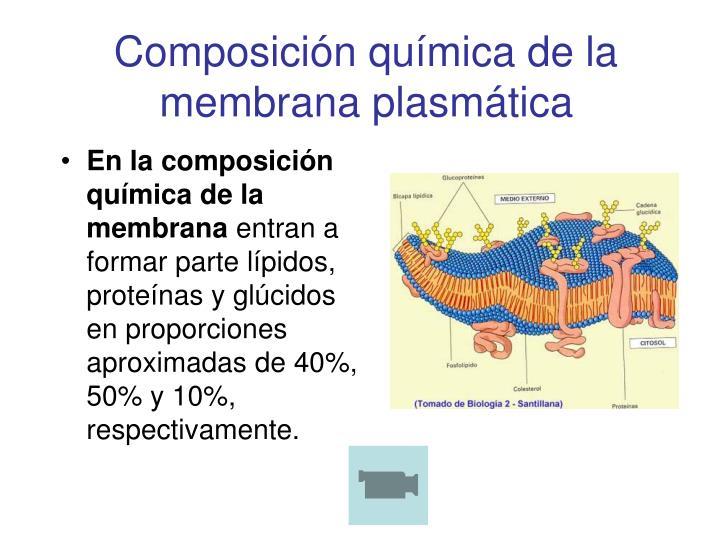 Composición química de la membrana plasmática