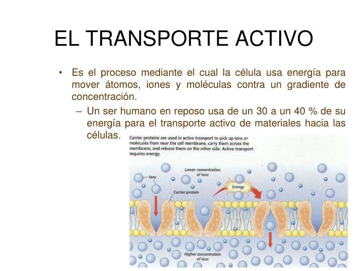 EL TRANSPORTE ACTIVO