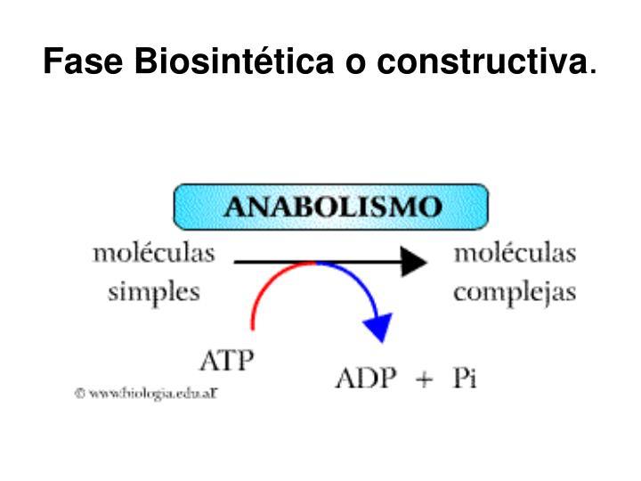 Fase Biosintética o constructiva
