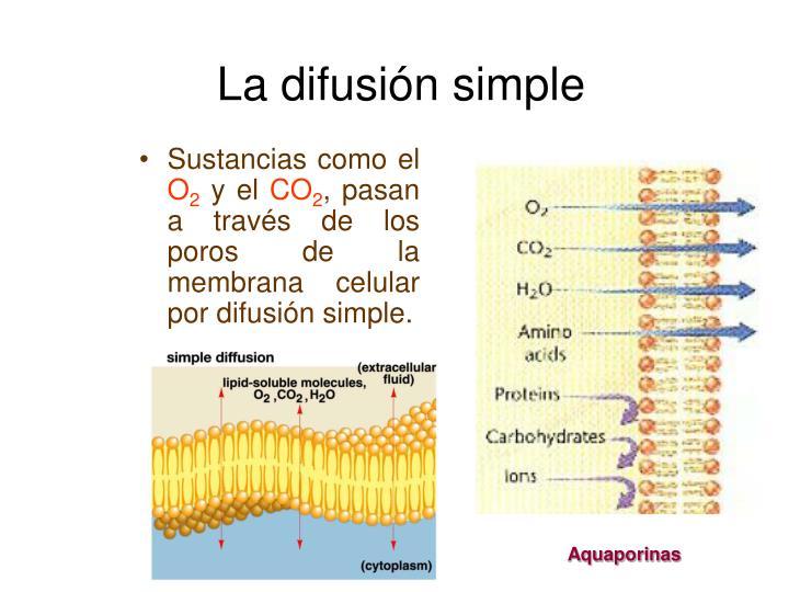 La difusión simple