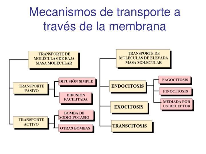 Mecanismos de transporte a través de la membrana