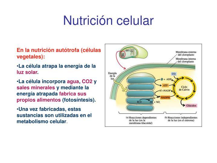 Nutrición celular
