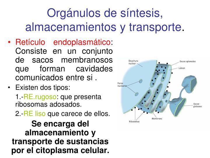 Orgánulos de síntesis, almacenamientos y transporte