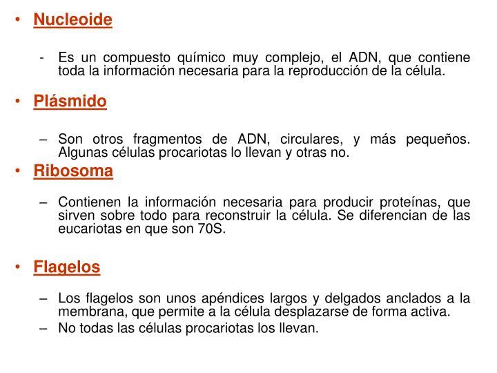 Nucleoide