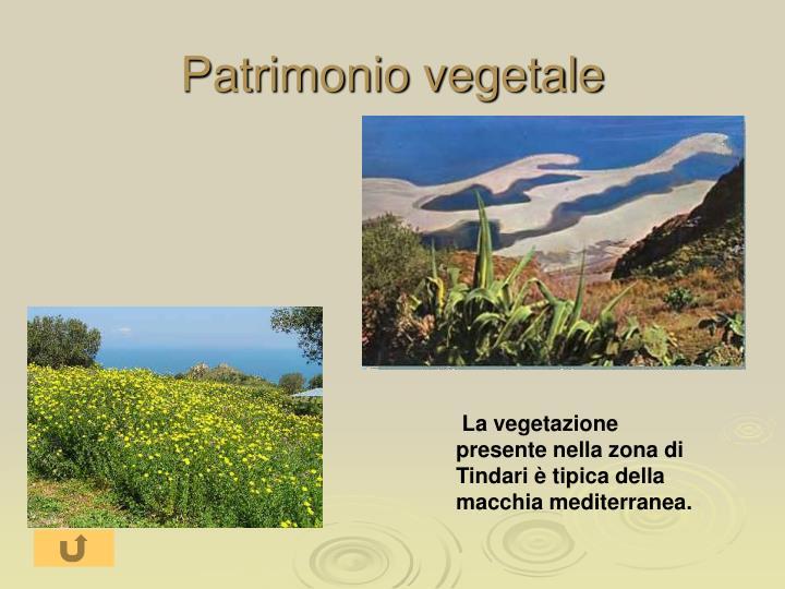Patrimonio vegetale