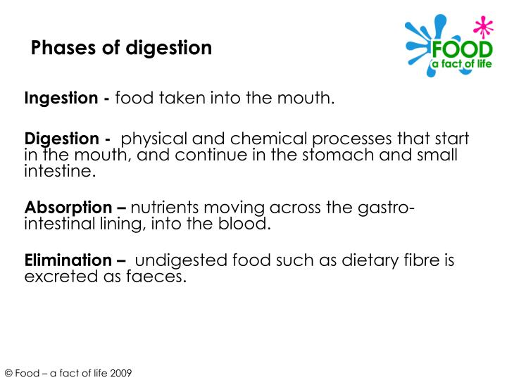 Phases of digestion