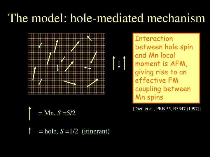 The model: hole-mediated mechanism