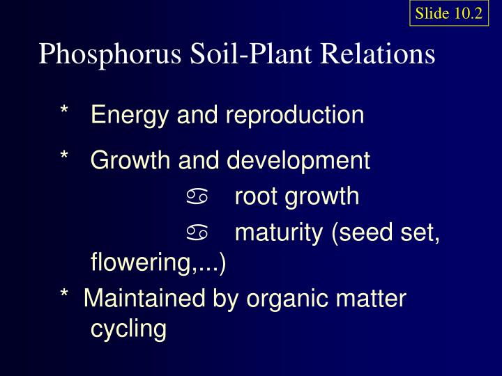 Phosphorus soil plant relations
