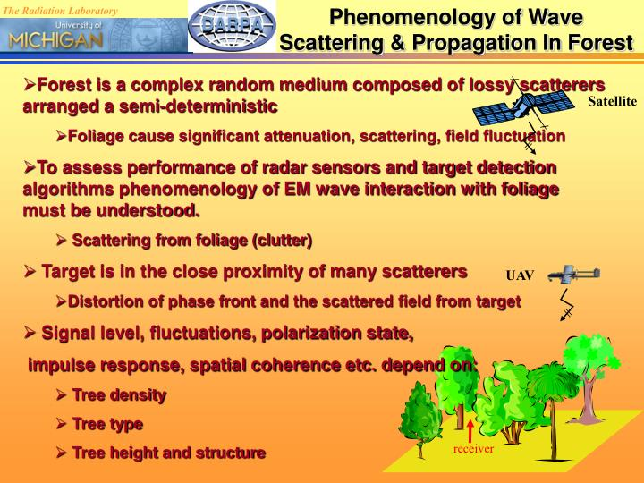 Phenomenology of Wave Scattering & Propagation In Forest