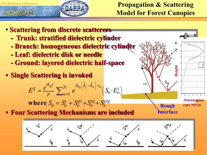 Propagation & Scattering Model for Forest Canopies