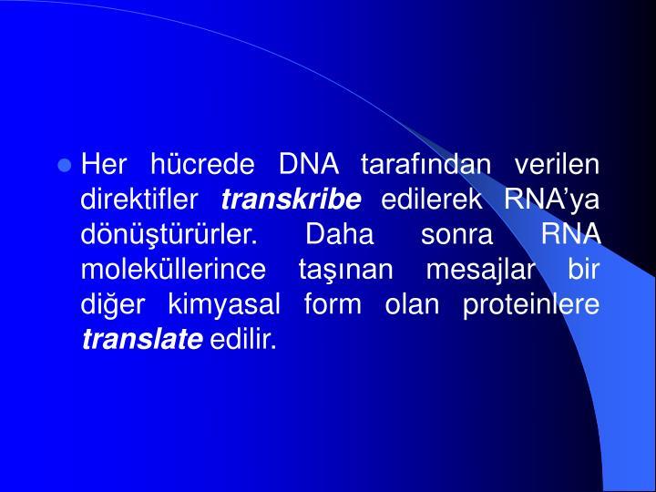 Her hücrede DNA tarafından verilen direktifler