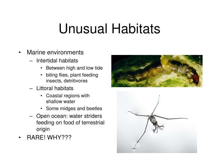 Unusual Habitats