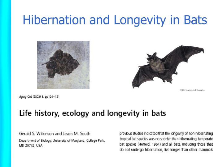 Hibernation and Longevity in Bats