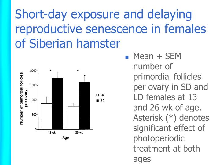 Short-day exposure and delaying reproductive senescence in females of Siberian hamster