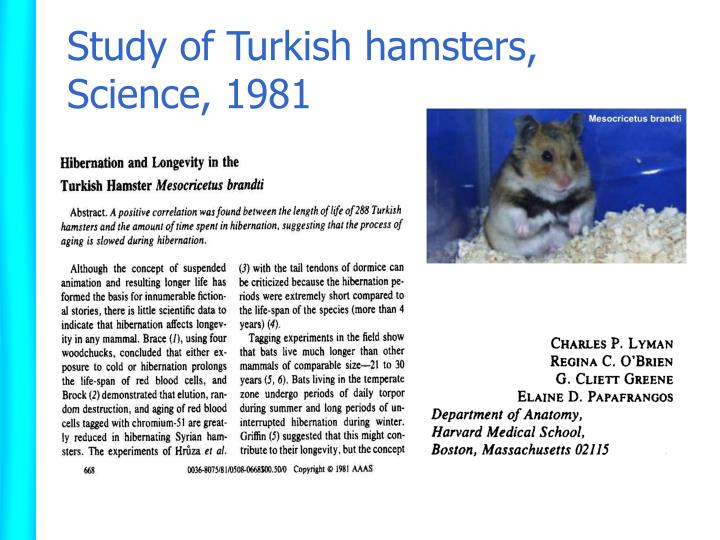 Study of turkish hamsters science 1981
