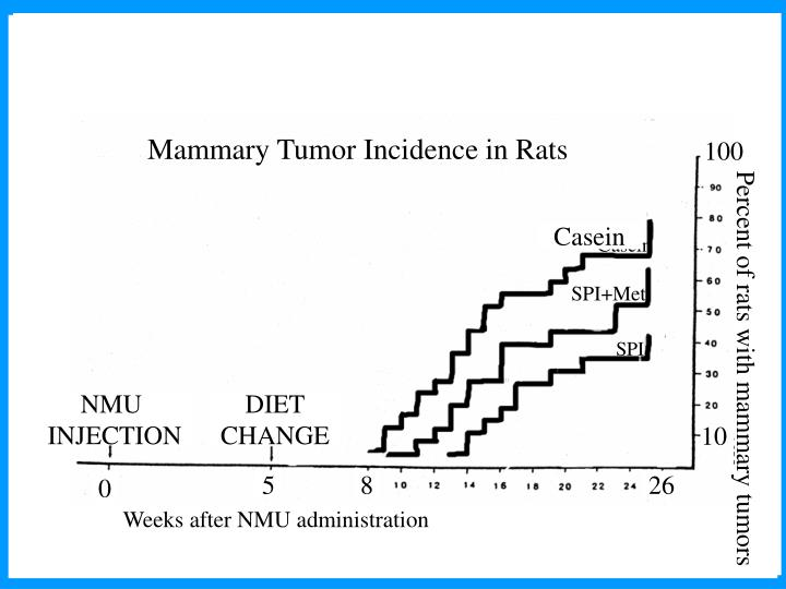Mammary Tumor Incidence in Rats