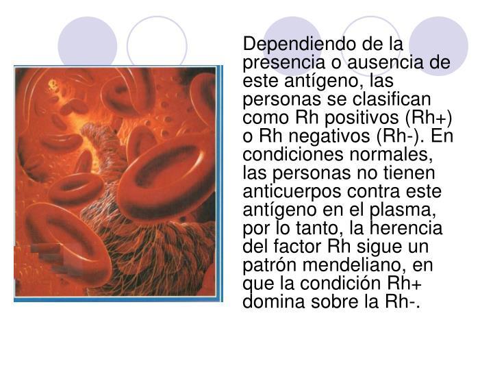 Dependiendo de la presencia o ausencia de este antígeno, las personas se clasifican como Rh positivos (Rh+) o Rh negativos (Rh-). En condiciones normales, las personas no tienen anticuerpos contra este antígeno en el plasma, por lo tanto, la herencia del factor Rh sigue un patrón mendeliano, en que la condición Rh+ domina sobre la Rh-.