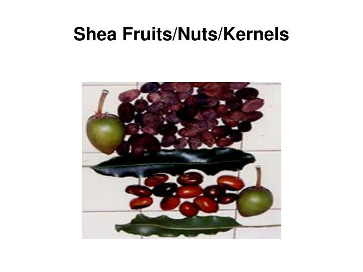 Shea Fruits/Nuts/Kernels