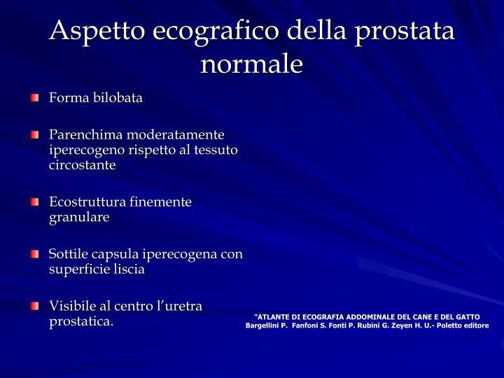 Aspetto ecografico della prostata normale