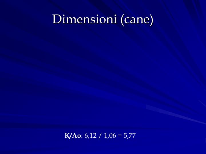 Dimensioni (cane)