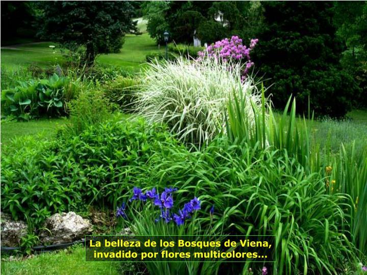 La belleza de los Bosques de Viena, invadido por flores multicolores...