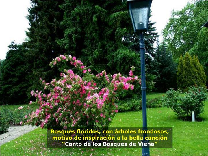 """Bosques floridos, con árboles frondosos, motivo de inspiración a la bella canción """""""