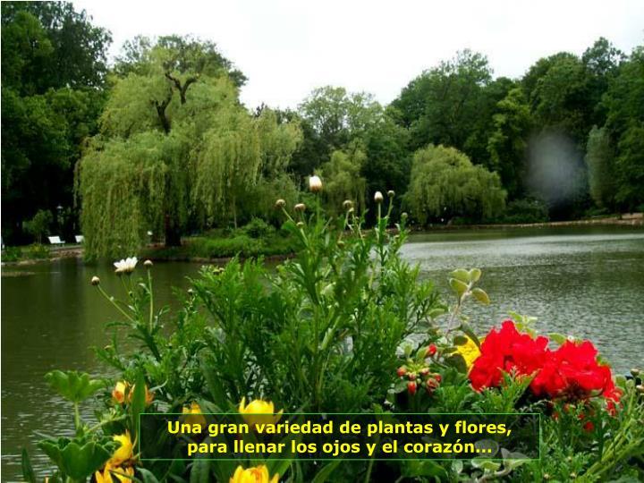 Una gran variedad de plantas y flores, para llenar los ojos y el corazón...