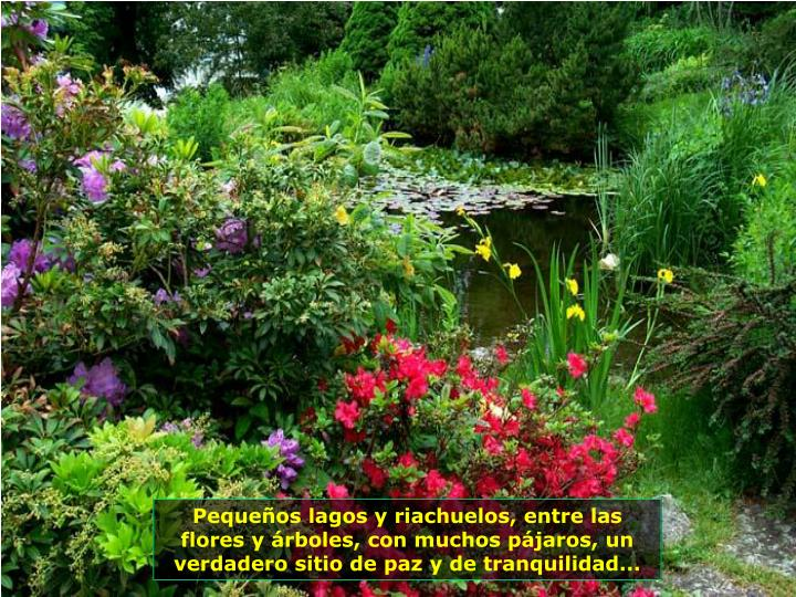 Pequeños lagos y riachuelos, entre las flores y árboles, con muchos pájaros, un verdadero sitio de paz y de tranquilidad...