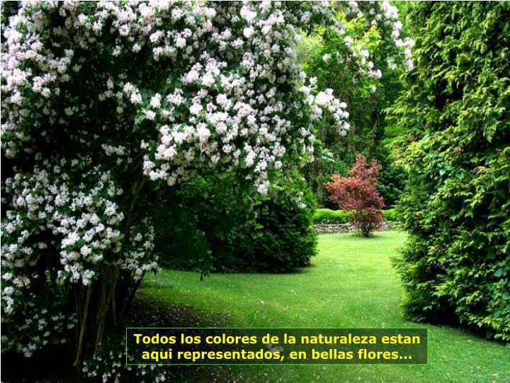 Todos los colores de la naturaleza estan aqui representados, en bellas flores...