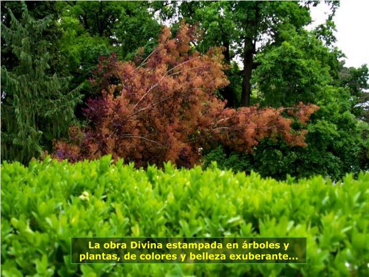 La obra Divina estampada en árboles y plantas, de colores y belleza exuberante...