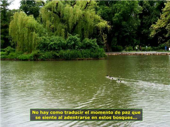 No hay como traducir el momento de paz que se siente al adentrarse en estos bosques...