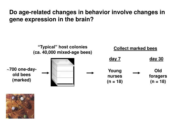 Do age-related changes in behavior involve changes in gene expression in the brain?