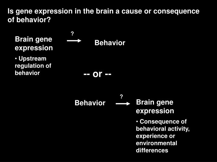 Is gene expression in the brain a cause or consequence of behavior?
