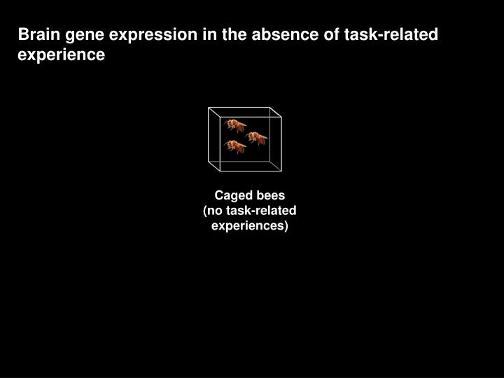 Brain gene expression in the absence of task-related experience