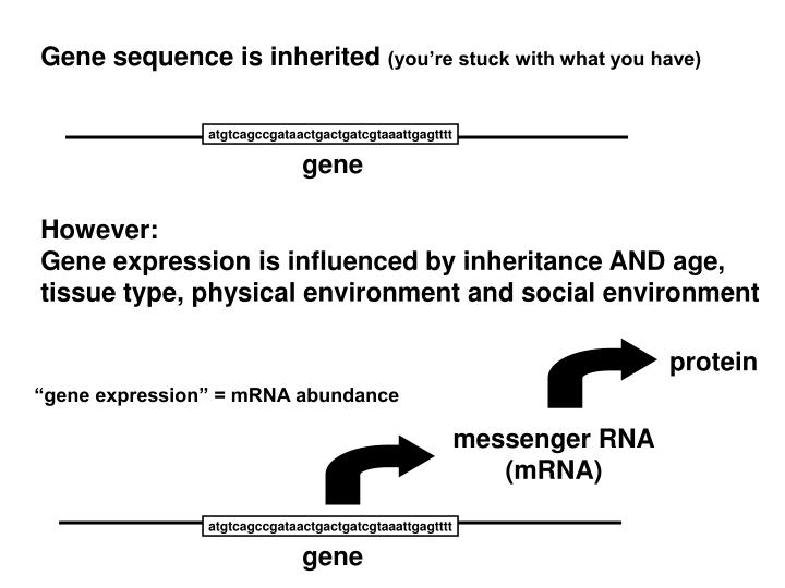 Gene sequence is inherited