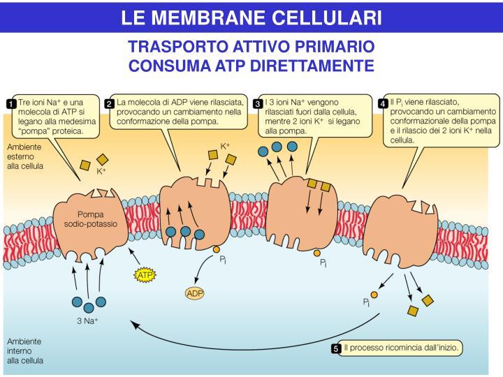 LE MEMBRANE CELLULARI