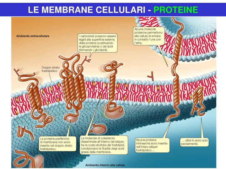 LE MEMBRANE CELLULARI -