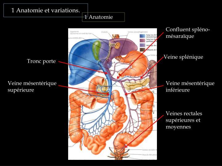 1 Anatomie et variations.