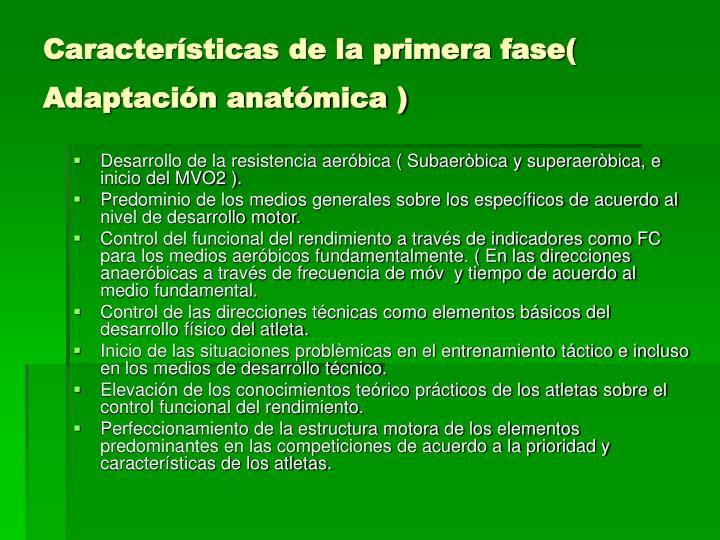 Características de la primera fase( Adaptación anatómica )