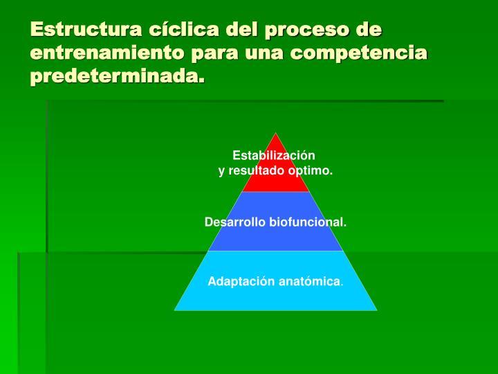 Estructura cíclica del proceso de entrenamiento para una competencia predeterminada.