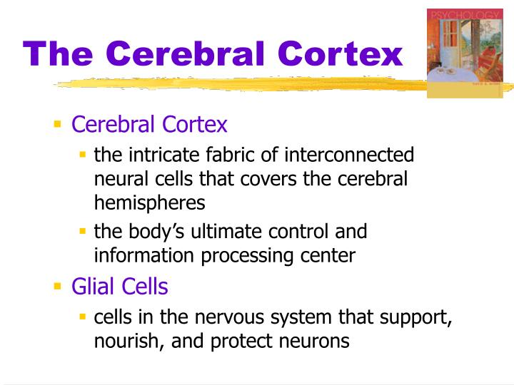 how the cerebral cortex subserves psychological Psychology & neuroscience stack exchange is a question and answer site for practitioners is neuroplasticity limited to the cerebral cortex in the brain.