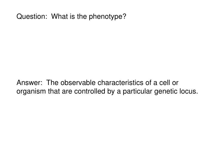 Question:  What is the phenotype?