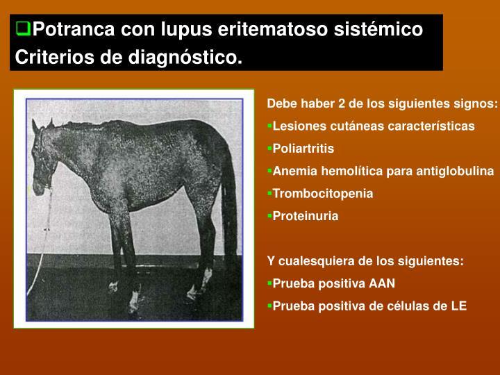 Potranca con lupus eritematoso sistémico