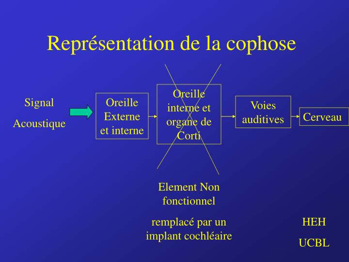 Oreille interne et organe de Corti
