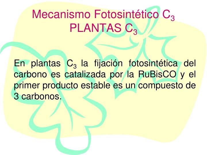 Mecanismo Fotosintético C